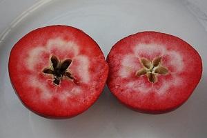 Früchte – Redlove