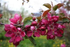 Blüte – Redlove