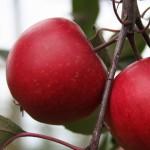 Redloves® für Ihren Garten